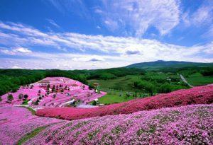 芝櫻、富士山、團遊,日本旅遊,