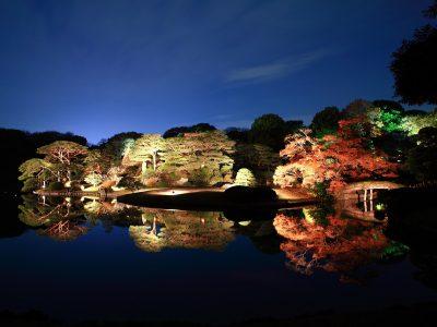 Leaves,Leaves view in Tokyo, Japanese garden