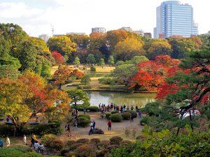 Red leaves, Maple Leaves, Rikugien Garden