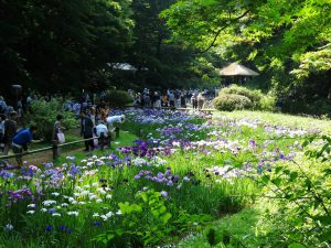 9_flowers