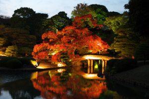 日本六義園, 夜燈紅葉