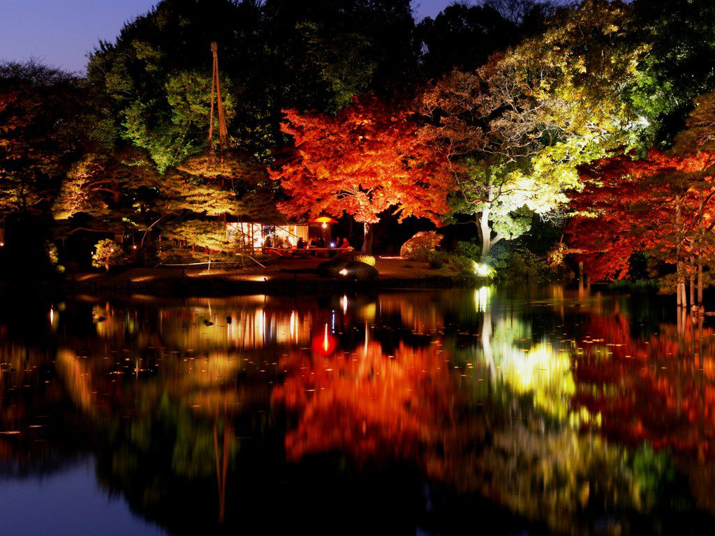 夜燈紅葉, 日本六義園, 秋天賞楓