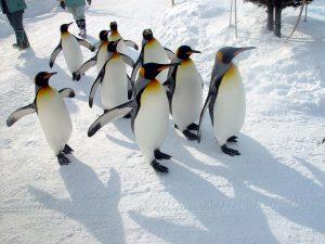 日本旭川動物園