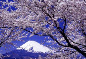 櫻花,日本,賞櫻,富士山,